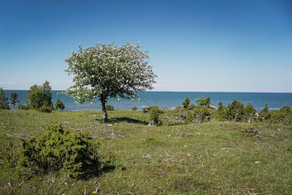 Saaremaa-Muhu-uugu-pank